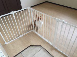 犬の保育園にクッションフロア