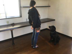 甲府市の犬の保育園