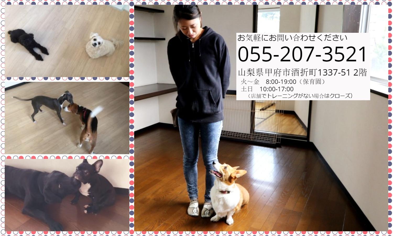 犬の保育園 Mof&Ful