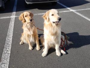 犬の保育園もふ&ふる