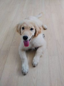 山梨県甲府市の犬の保育園もふ&ふる