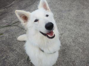 山梨県甲府市の犬の保育園もふ&ふる 犬のしつけ ドッグトレーニング